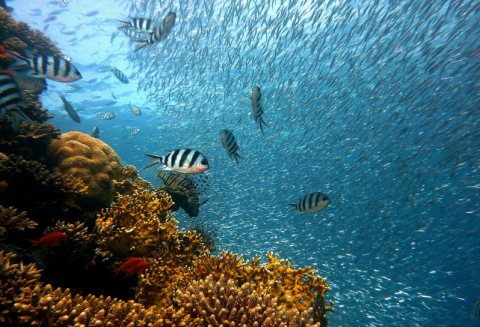Coral reefs: climate change and pesticides could conspire to crash fish populations