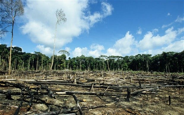 The world's remaining forests might be in bigger trouble than we thought
