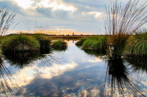 Flooding can help resurrect wetlands and slow climate change – here's how