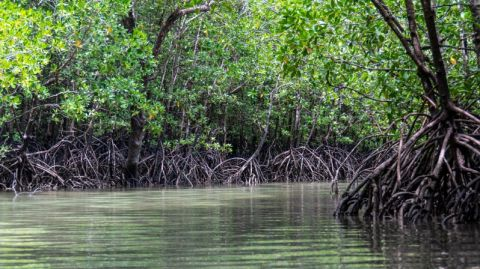 Mangroves from space: 30 years of satellite images are helping us understand how climate change threatens these valuable forests